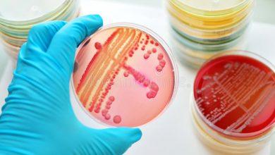 تصویر از منابع و جزوات کارشناسی ارشد رشته میکروبیولوژی پزشکی وزارت بهداشت